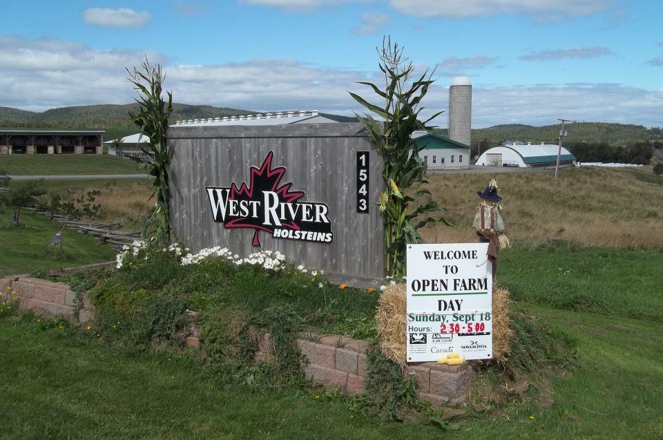 West River Holsteins